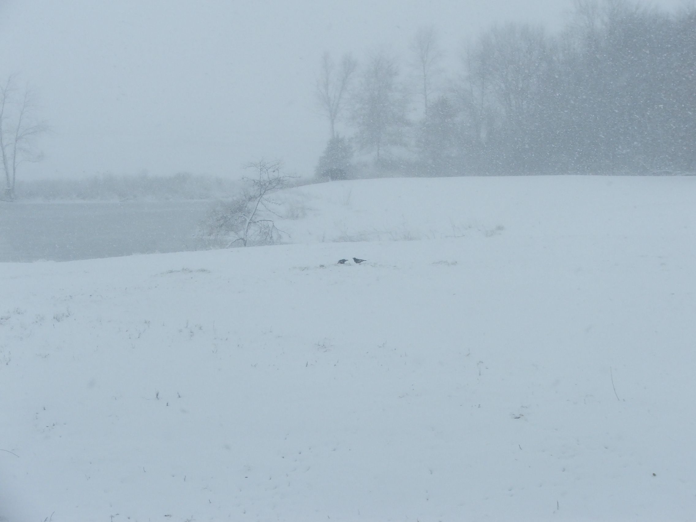 snow1001.jpg